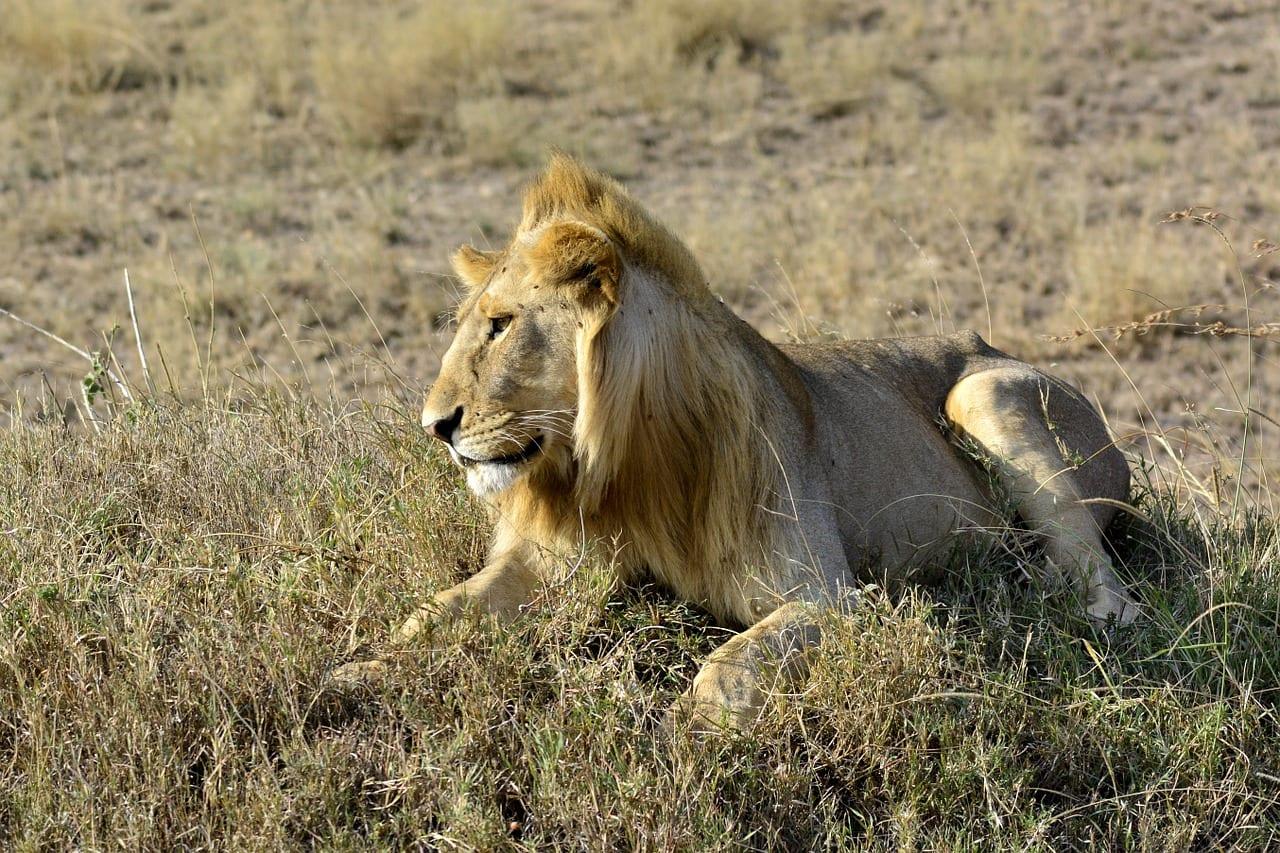 зачем в зимбабве красят бабуинов в белый цвет